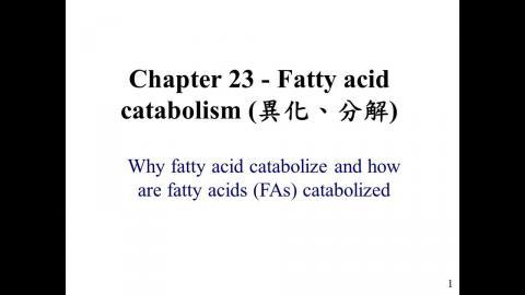 Biochemistry ch 23 200511 投影片放映.wmv