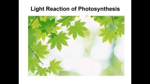 20201102_植物生理與微生物體學 PLANT PHYSIOLOGY AND MICROBIOME