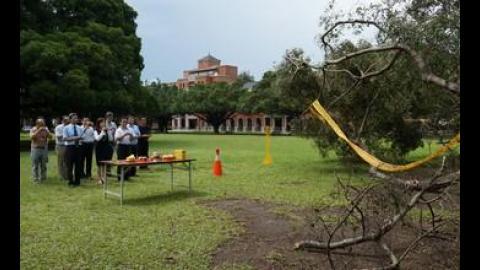 【影音】搶救大榕樹 成大13日舉行榕樹救治動土儀式