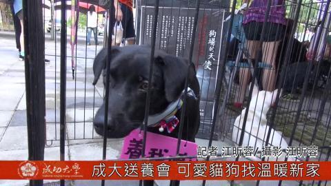 【影音】成大送養會 可愛貓狗找溫暖新家(by統計106江昕蓉)