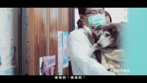 2016慈愛動物基金會微電影20161116-1.mp4