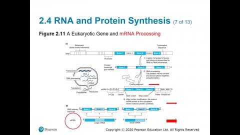108-2 生物科技概論 04.08.mp4