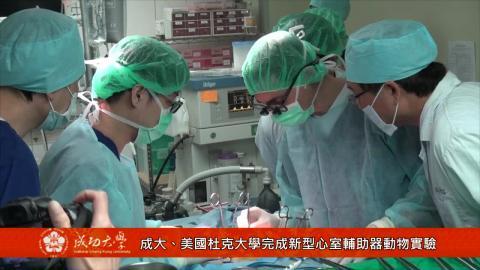 【影音】成大、美國杜克大學完成牛隻兩件式心室輔助器微創手術